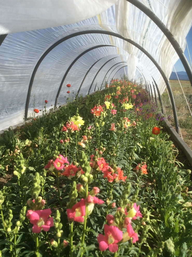 rancho-verde-flowers-hoop-house