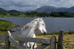 Phreckles Ireland Photography